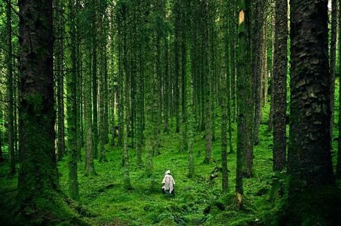 homme perdu dans la forêt